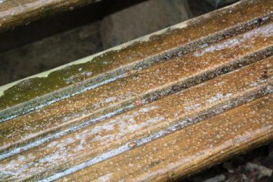 Slick icy steps