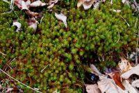 Bright green moss enjoying the seep moisture.