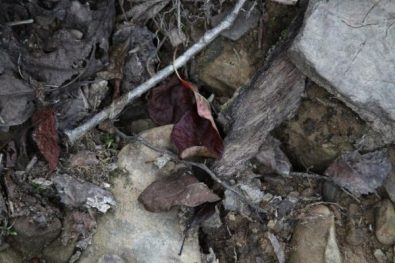 Fallen leaf full of textures and dark colors