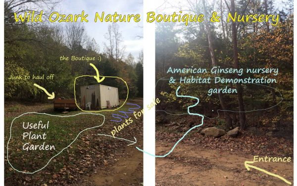 Plans for the Wild Ozark Ginseng Garden, Boutique & Nursery