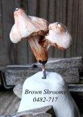 brown-shroomsl-0482-717