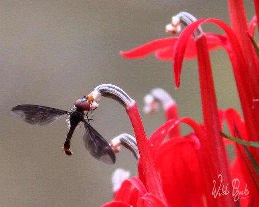 Pollinator Visiting
