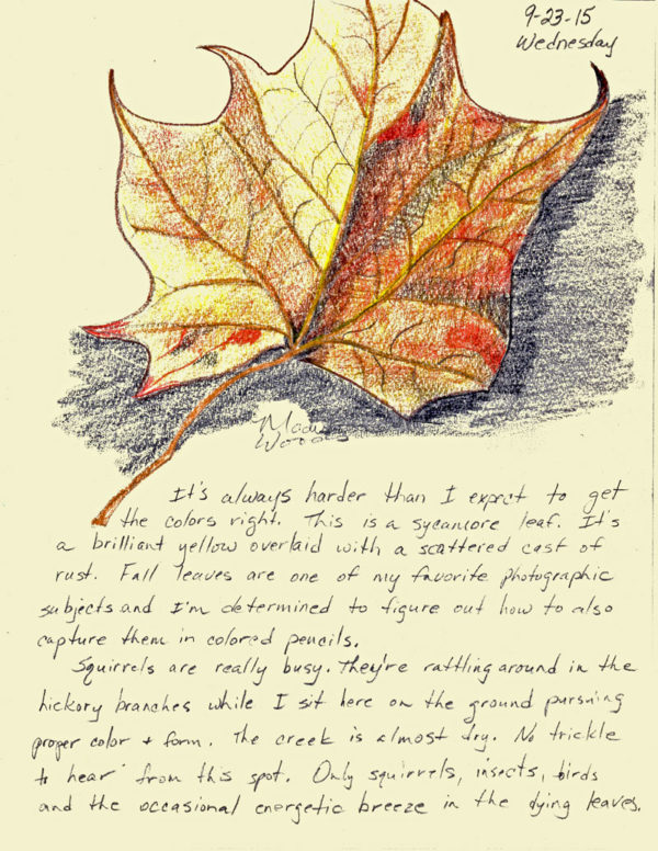 Day 3, Sycamore Leaf