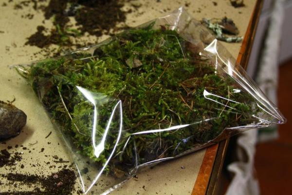 A bag of moss.