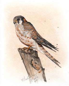Kestrel No. 3, featuring all handmade watercolor paints made from local stone and clay sources. Panic stage navigated.