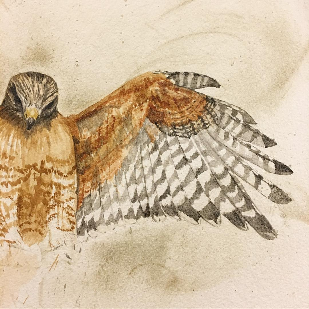 A Madison Woods work in progress, red-shouldered hawk. Wing detail of color blocks.