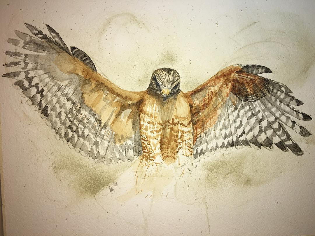 A Madison Woods work in progress, red-shouldered hawk. Both wings are color blocked.