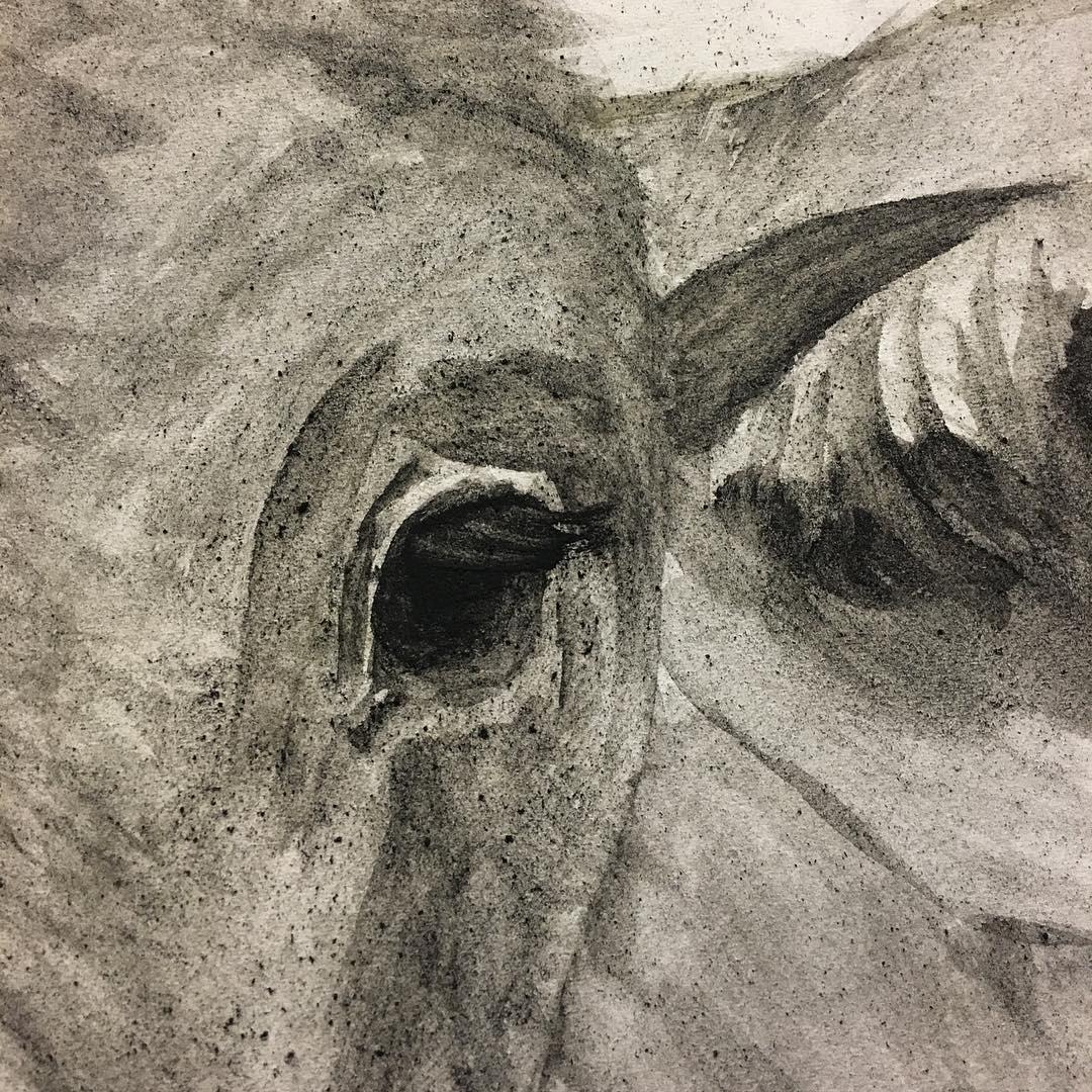 painting in progress, pic of eyelashes on brahman calf.