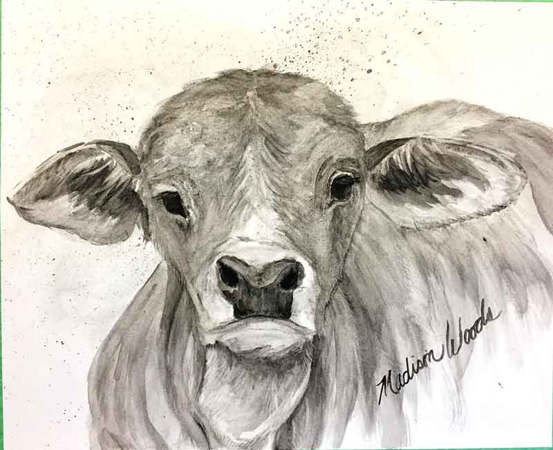 """""""Brahman Baby"""", in bone black, creek shale, and willow black. At the point now where I'll begin adding details, refining highlights and shadows. You can see the whole process by going to the post at my Wild Ozark site."""