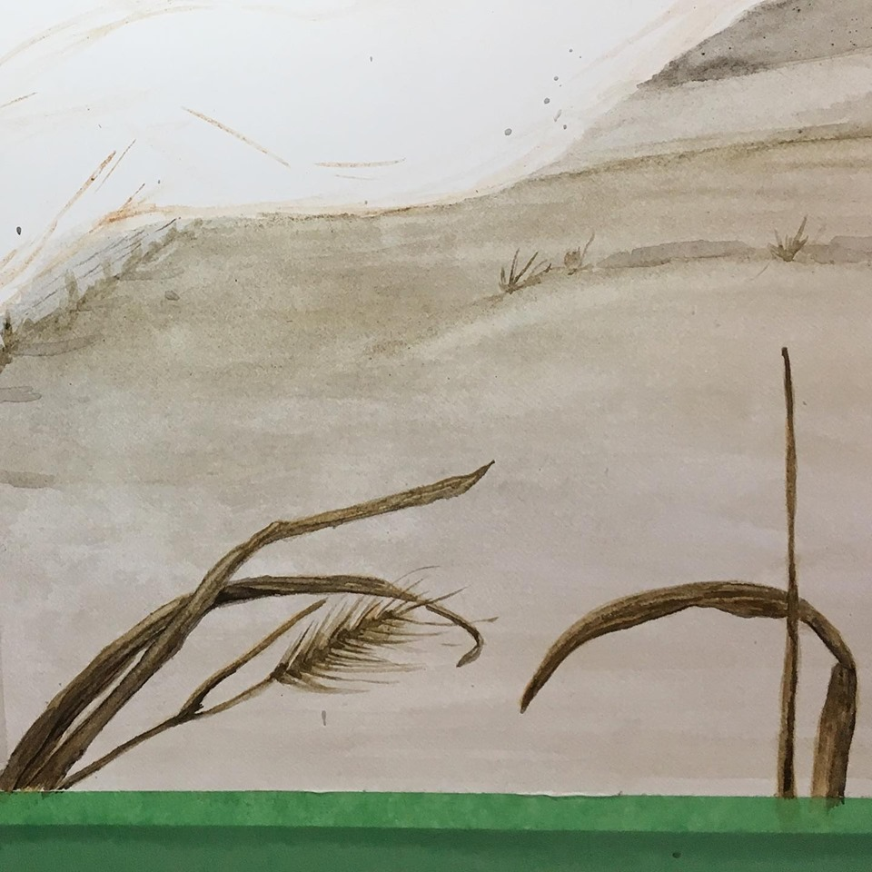 Foreground grasses