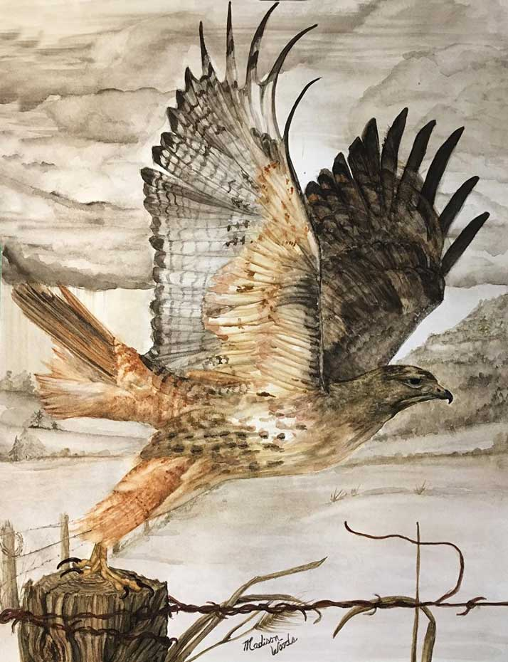 """""""Lift Off"""", in Ozark earth pigments. The model was a photo by Mike TR Dunn, used by permission. Media is handmade watercolors using real earth pigments on Fabriano 300# and is 16"""" x 20"""". The Red-tailed hawk is one of the birds in my ongoing Ozark Birds of Prey project."""