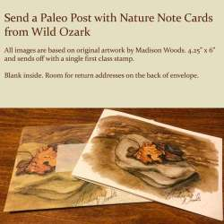 Ozark Rocks & Leaf Note Card