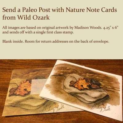Ozark Rocks & Leaf Note Card