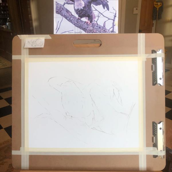The first lines to go down for my bald eagle painting is the rough sketch. I do it with a brush and paint.