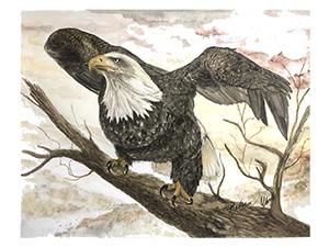 A bald eagle in Ozark pigments.