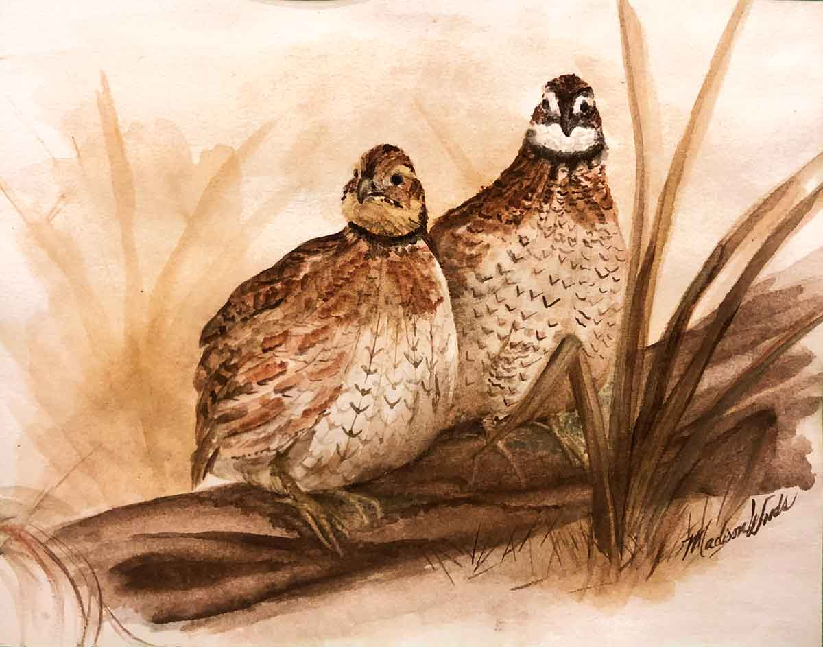 """""""A Curious Pair"""", Bobwhite Quail by Madison Woods. All Ozark pigments."""