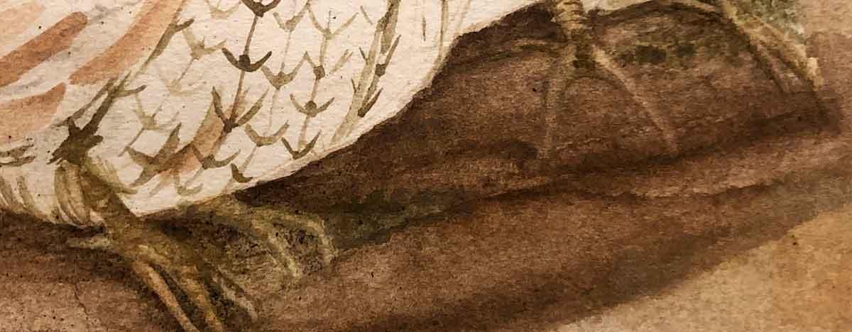 Quail feet :) Working on a pair of Bobwhite quails in Ozark pigments.