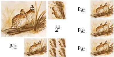 An uncut sheet of my bobwhite quail prints.