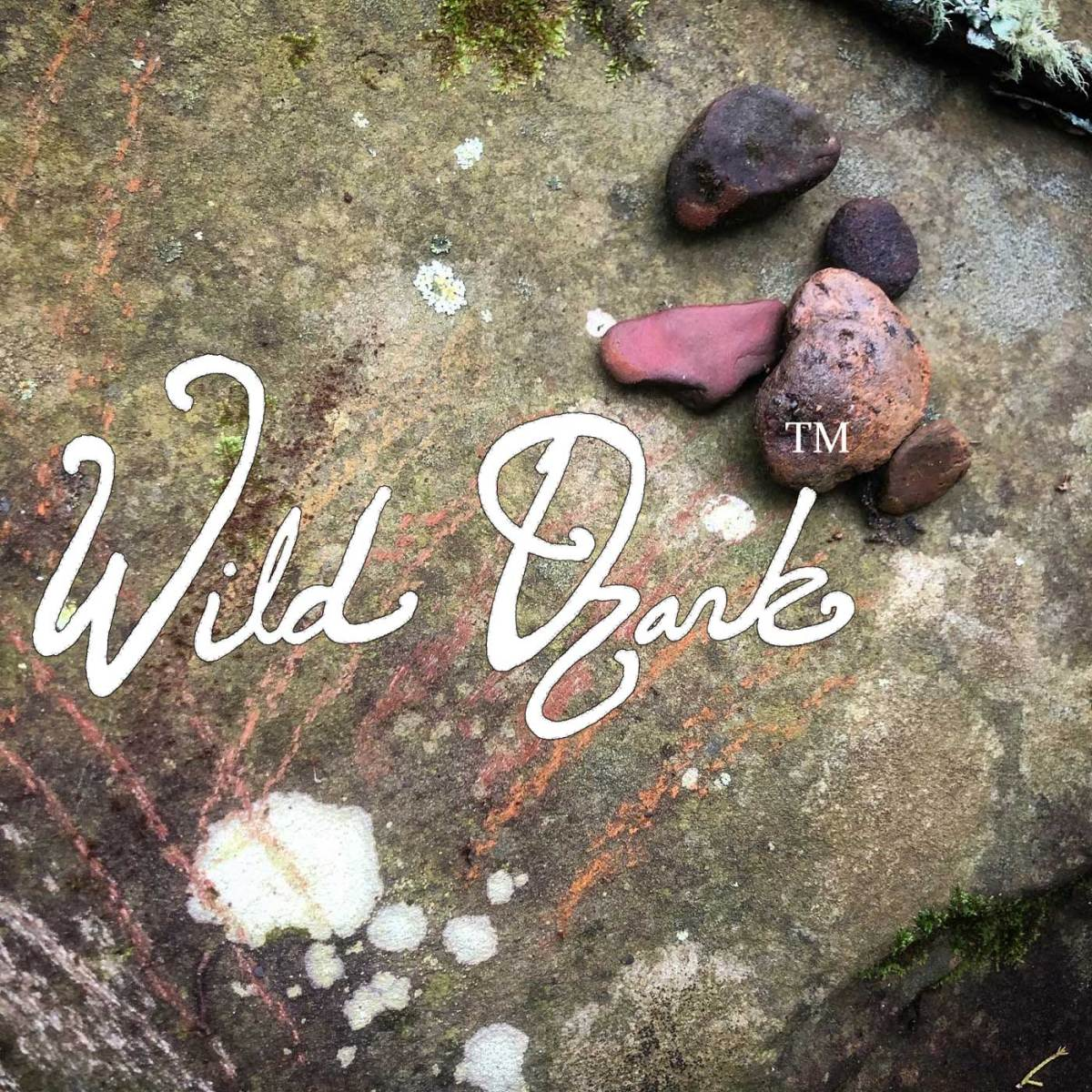 What is Wild Ozark? Visit our 'About' page to find out!