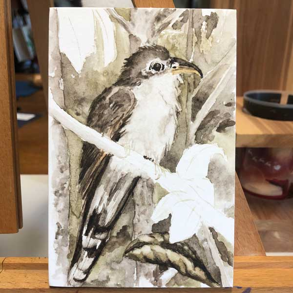 Almost done with the yellow-billed cuckoo.