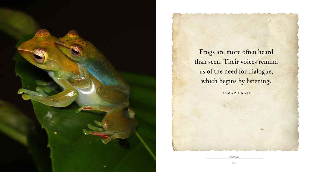 CROAK is a book frog lovers of all ages will enjoy.
