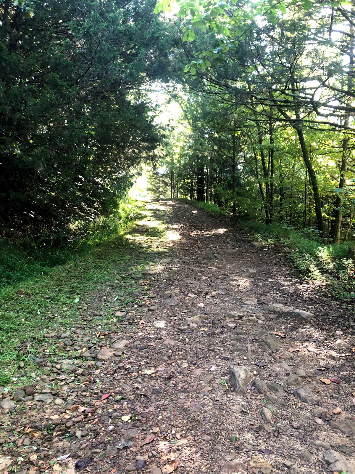 The driveway is an easy location to see and understand encroachment by nature.