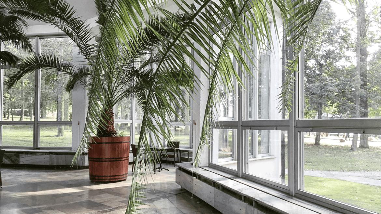 palmiarnia w naleczowie