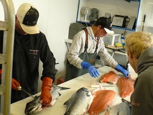 The processors and deckhands work together to get all the fish filleted, vacuum packed, racked, and frozen each day.