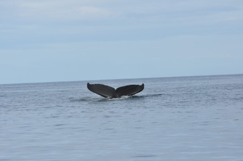 An Incredible Whale