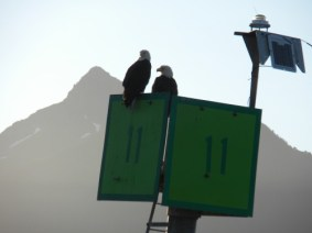 Another popular eagle fishing lookout