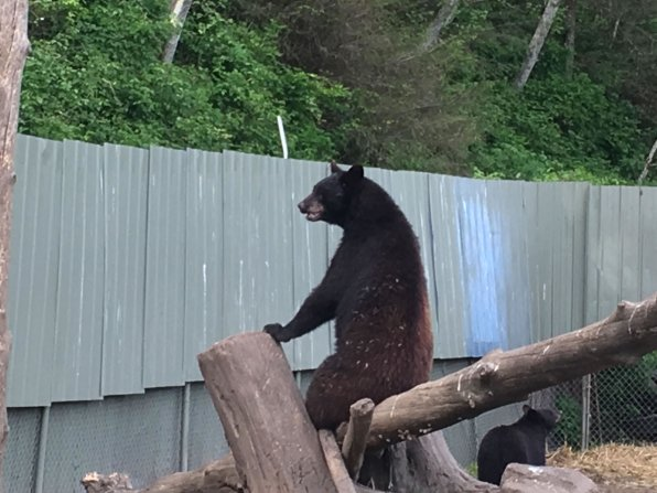 Fortress Of The Bear Sitka Alaska 13