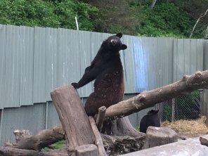 Fortress Of The Bear Sitka Alaska 17