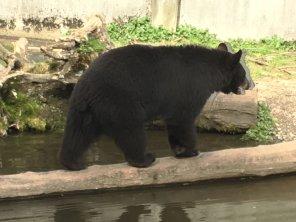 Fortress Of The Bear Sitka Alaska 20