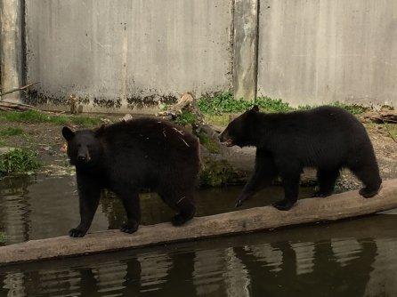 Fortress Of The Bear Sitka Alaska 22