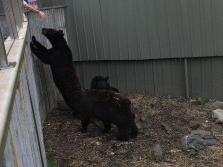 Fortress Of The Bear Sitka Alaska 27