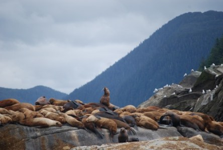 The Sea Lion Hang Out