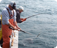 Shooting a Large Halibut
