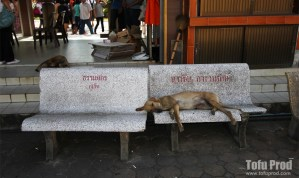 First Few Days in Bangkok: Fine Man-Wool and Stray Dogs