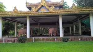 pink elephants yangon