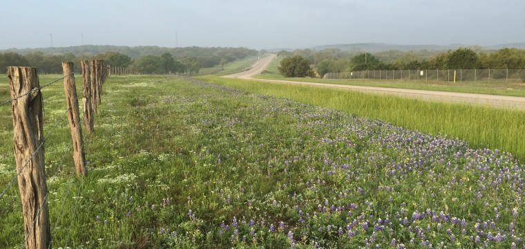 texas-bluebonnets-lupinus-texensis–blanco-rd_25879601200_o