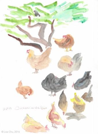 Chickens sepia study 12.10.15