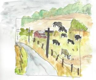 Cows on a hill San Gregorio 11.9.15