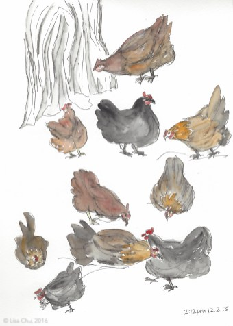 Hourly chicken comic 2.12pm 12.2.15