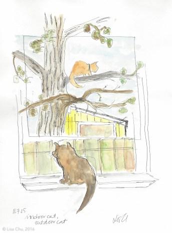 Indoor Cat Outdoor Cat