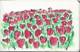 Tulips - red