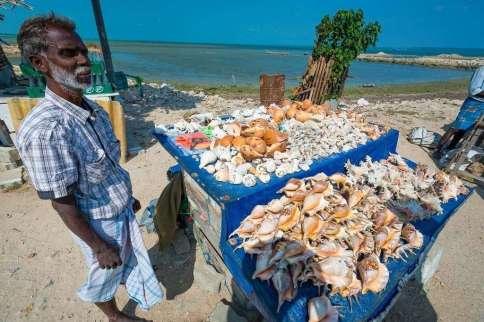 man selling seashells
