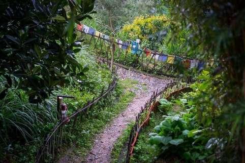Paths through Shivapuri Heights gardens