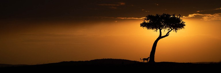Top 10 things to do on an East African safari