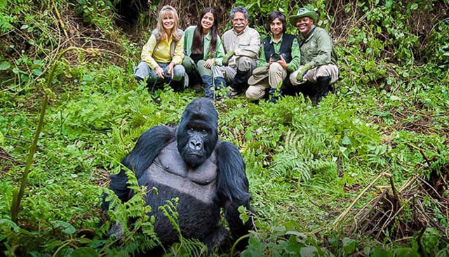 Gorilla and its admirers