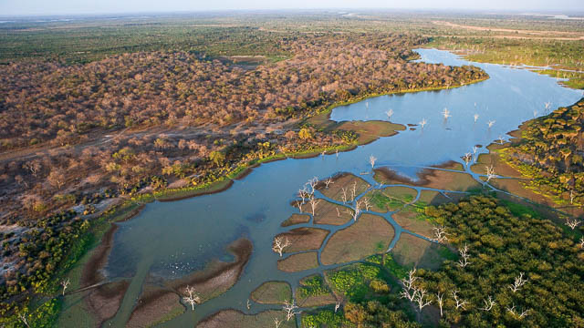 Swamps of Okavango